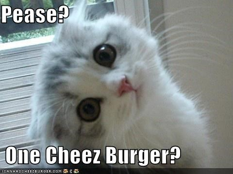Cheezburger Image 4479879680