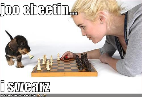 cheater,cheating,chess,chess game,german shepherd,no fair,puppy