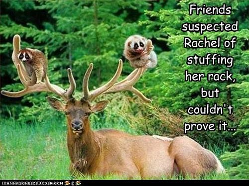 caption,captioned,double meaning,elk,lack,opossum,proof,pun,rack,stuffing,suspect,suspicion