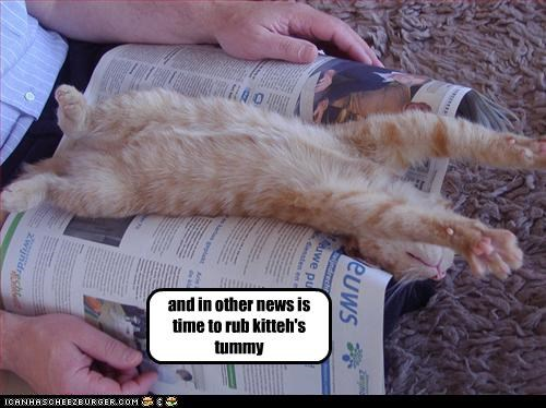 belly,caption,captioned,cat,do want,kitten,news,newspaper,other,rub,sleeping,stretching,time
