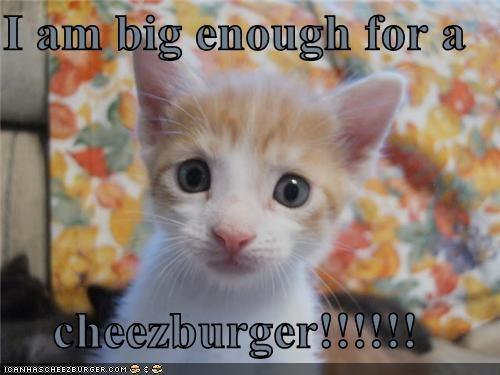 Cheezburger Image 4482681856