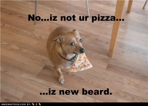 beard chihuahua food mixed breed noms people food pizza pizza beard whatbreed