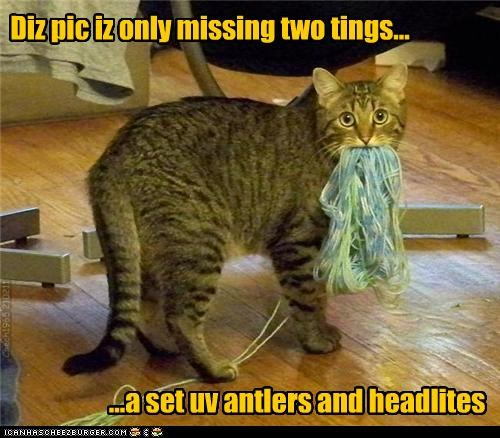 afraid,caption,captioned,cat,caught,deer,figure of speech,headlights,missing,only,picture,saying,things,two,yarn