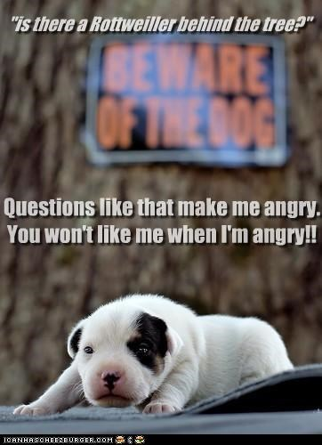 angry,phrase,puppy,question,quote,reference,the hulk,upset,whatbreed