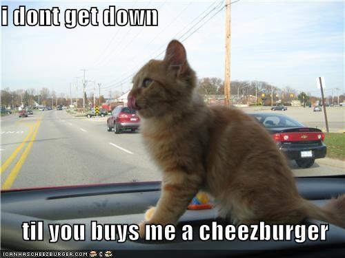 Cheezburger Image 4484400128