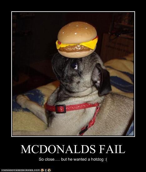 Cheezburger Image 4484692224
