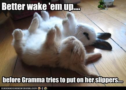 Better wake 'em up.... before Gramma tries to put on her slippers....