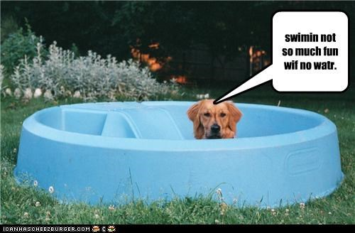 disappointed empty golden retriever lacking not fun not so much pool swimming water without - 4485386240