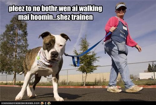 dont-bother-us,human,no,pit bull,pitbull,walk
