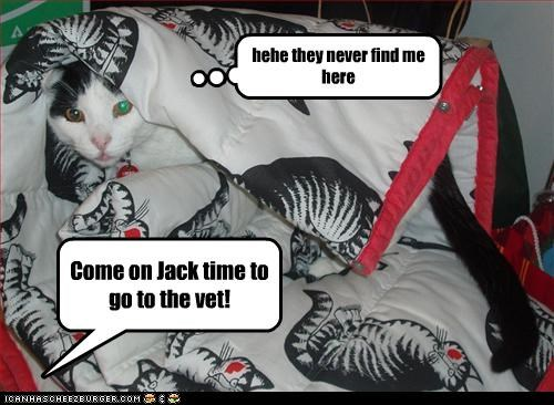 Come on Jack time to go to the vet! hehe they never find me here