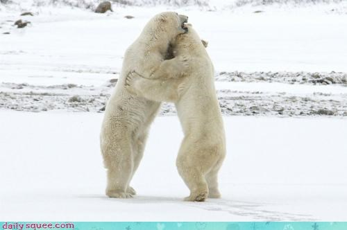 acting like animals bear bears confused dancing doing it wrong dramatic hyperbole incorrect polar bear polar bears prom steps worried - 4486601984