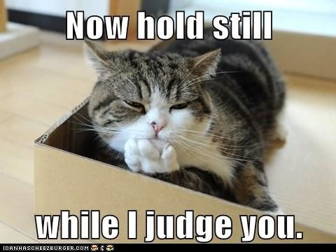 I Can Has Cheezburger? - judgemental - Funny Animals Online ...