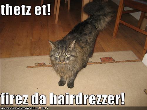 Cheezburger Image 4486951936