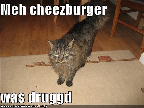 Cheezburger Image 4486959872