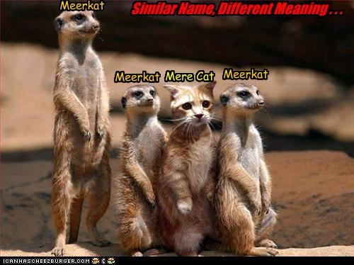 caption captioned cat different homophone meaning meerkat Meerkats mere name pun Sad similar - 4487534592