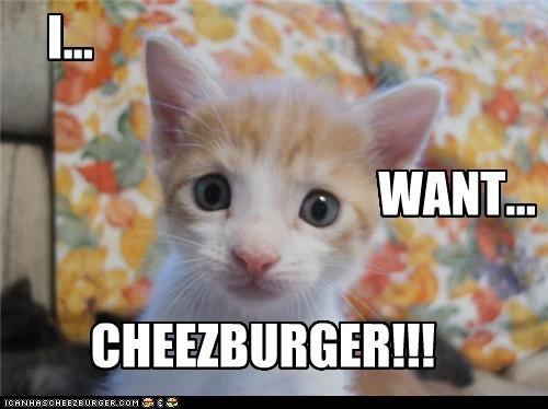 Cheezburger Image 4487892736