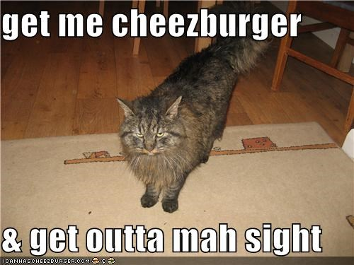 Cheezburger Image 4487948288