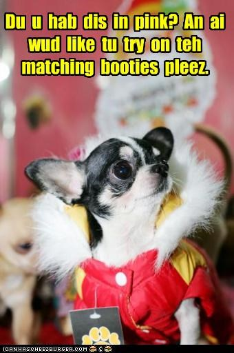 boots,chihuahua,colors,jacket,matching,outfit,question,shopping,trying