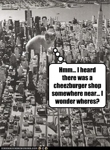 Cheezburger Image 4488173824