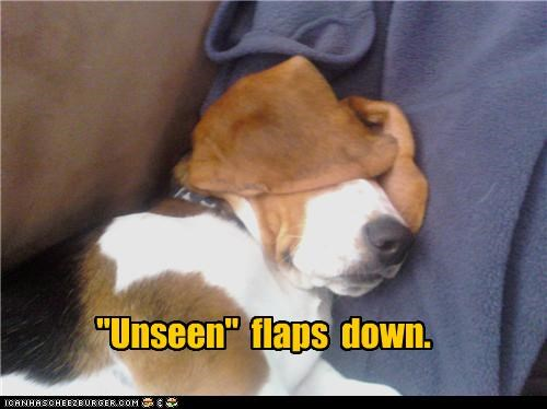 basset hound,covering,down,ears,flaps,hiding,unseen,what has been seen