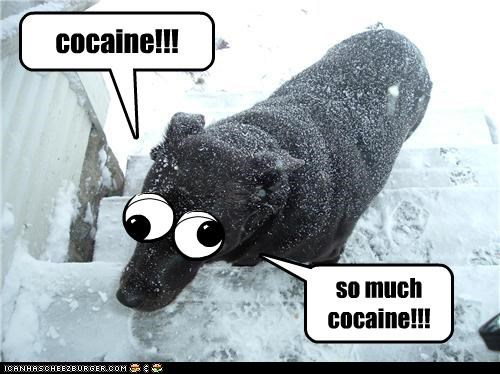 cocaine!!! so much cocaine!!!