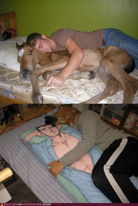 anime,centaur,horse,loneliness,love,Pillow,sleeping,wtf
