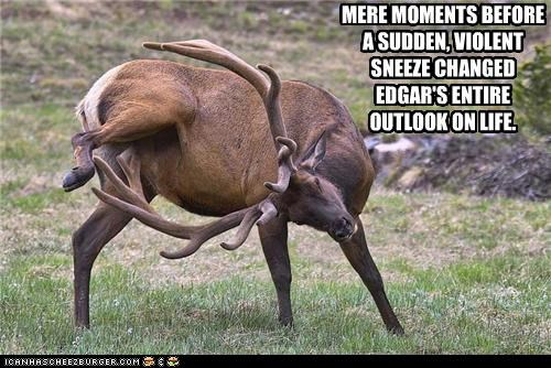 accident,antlers,before,caption,captioned,change,changed,elk,life,lifechanging,mere,moments,pain,sneeze,sudden,violent