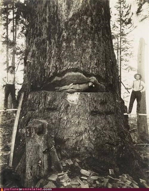 redwood seems safe vintage wtf yikes - 4489480192