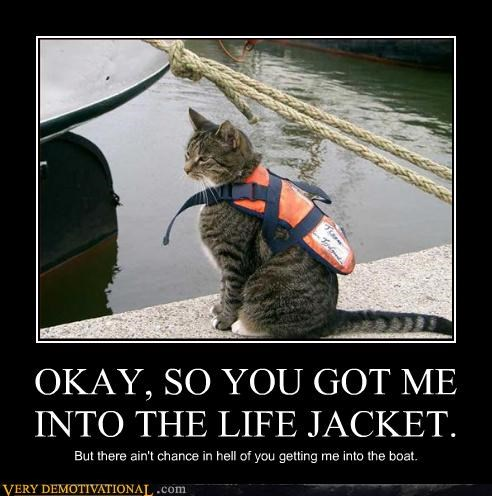 boat cat hilarious life jacket