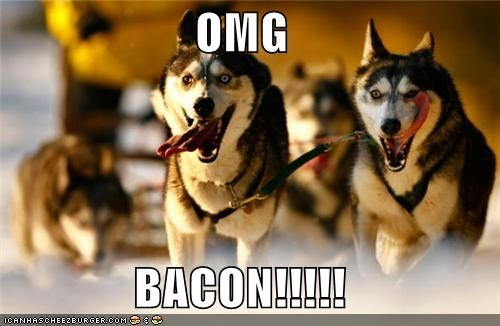 bacon do want excited huskies husky oh my god omg running - 4489692672