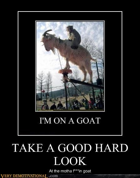 TAKE A GOOD HARD LOOK At the motha f***in goat