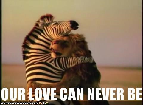 caption,captioned,destiny,fight,hug,Interspecies Love,lion,love,Predator,Sad,zebra