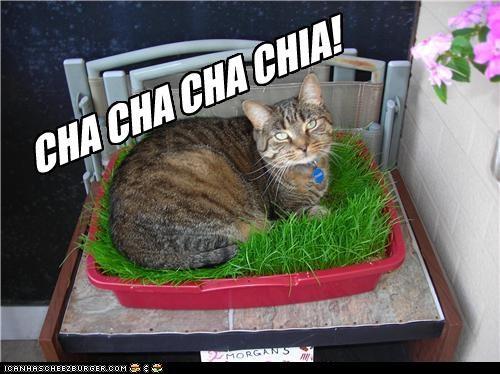 Cheezburger Image 4489945600