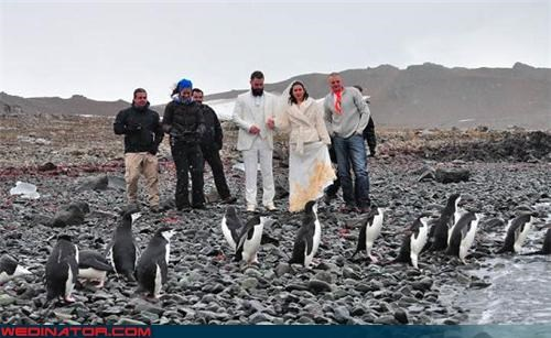 arctic wedding,funny wedding photos,outdoor wedding,penguins