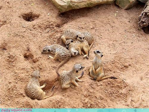 heart,intentional,love,meerkat,Meerkats,pile,reflecting,reflection,shape,squee spree