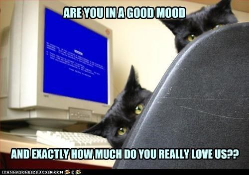 accident afraid borked caption captioned cat Cats computer exactly good how much love mood question you - 4490140672