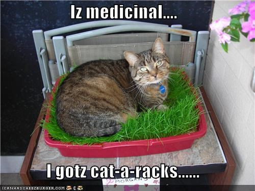 caption,captioned,cat,cataract,cataracts,condition,excuse,grass,medicinal,plant,pun,reason
