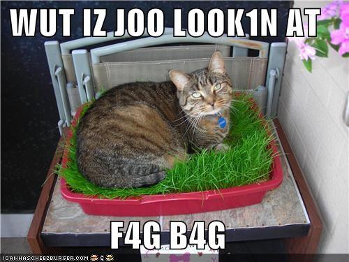 Cheezburger Image 4490244352