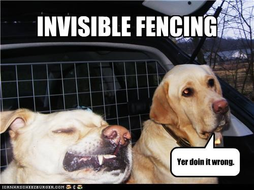 barrier,derpface,derpy,doing it wrong,fence,Fencing,invisible,labrador,wall
