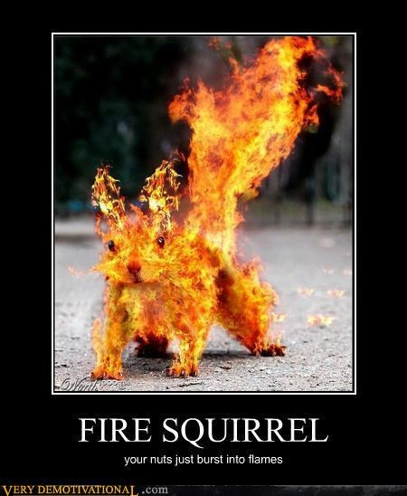 wtf fire squirrel photoshop - 4490476800