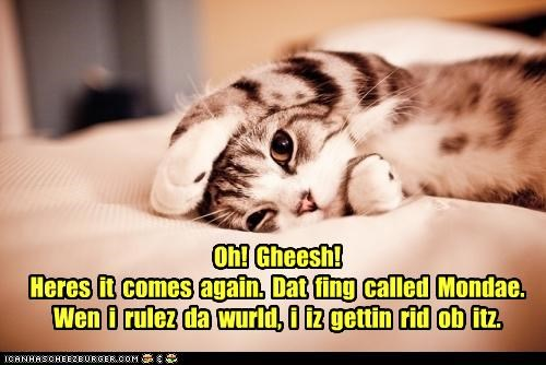 again caption captioned cat coming do not want exclamation getting Hall of Fame here it comes monday planning rid ruler thinking world - 4490574336