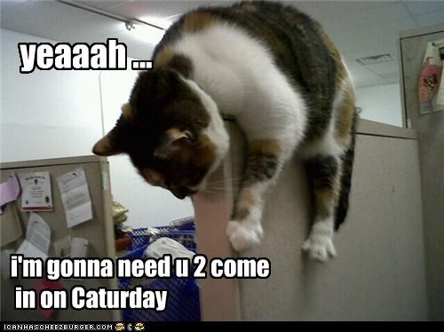 Cheezburger Image 4490583040