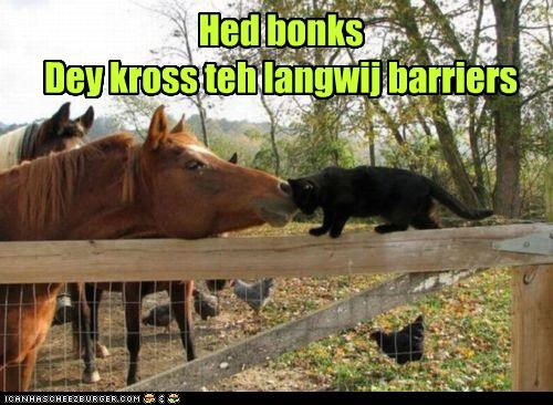barriers,bonks,caption,captioned,cat,cross,friends,friendship,head,horse,language,nuzzling