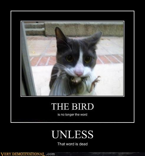 yikes,cat,bird