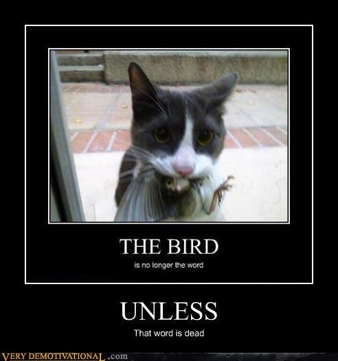 yikes cat bird - 4491129344