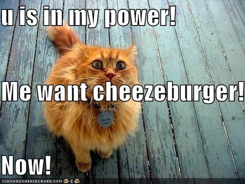 Cheezburger Image 4491136768