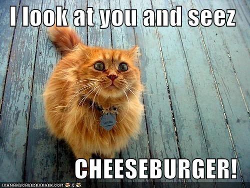 Cheezburger Image 4491151616