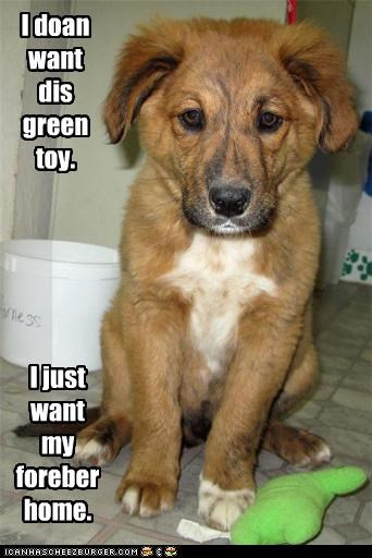 I doan want dis green toy. I just want my foreber home.