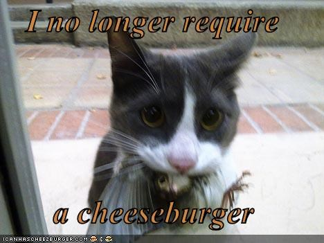 Cheezburger Image 4491309056