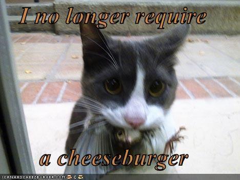 Cheezburger Image 4491309056